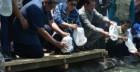 Presiden Kunjungi Budidaya Udang Skala Mini Empang Plastik di Pacitan